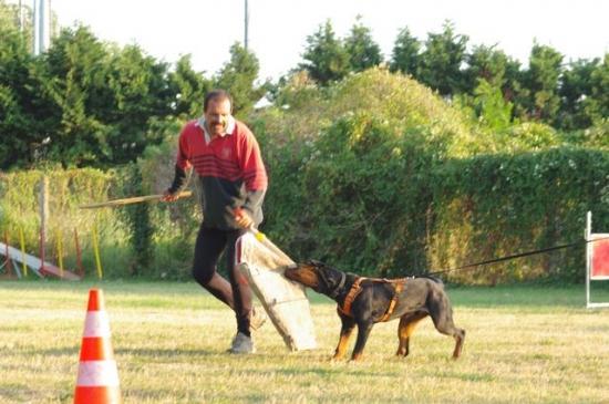 Drago du Domaine des Eclaireurs, été 2009