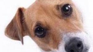 Apprendre proprete communiquer chien1