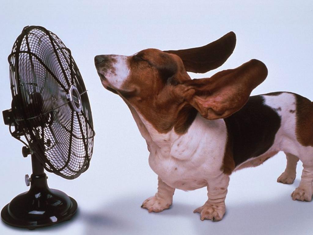Chien ventilateur chaud chaleur canicule 1024x768
