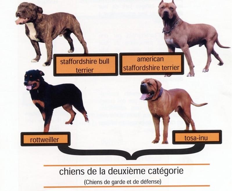 Chiens2