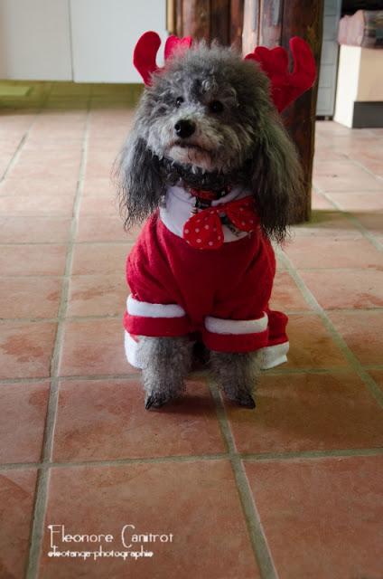 Chouky le père Noël