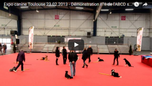 Exposition canine de toulouse 23 fevrier 2013