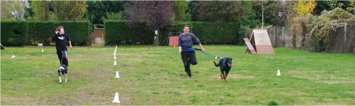 Rapid Cani