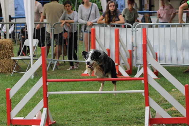 Concours d'agility
