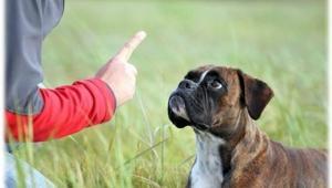Punition du chien